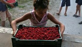 Bosnia Erzegovina: COOPERATIVA INSIEME