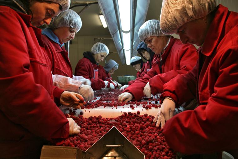 foto di Mario Boccia - coop insieme lavorazione lamponi sebrenica